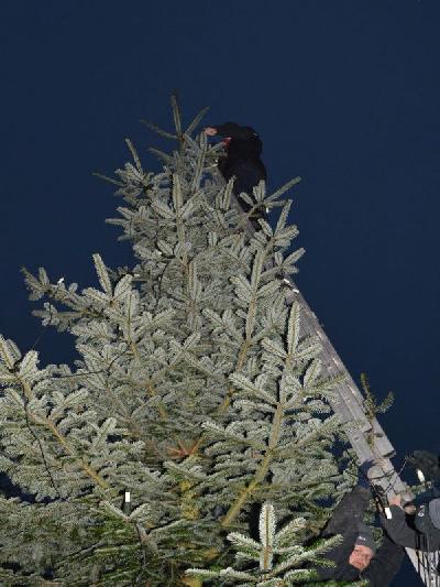 Das Bild Weihnachtsbaum2014DSC_0064.JPG vergrössern